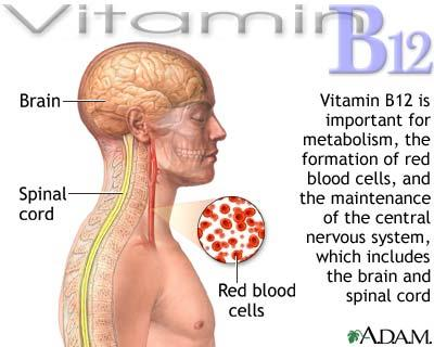 Importance of Vitamin B12,brain,spinal cord,red blood cells,