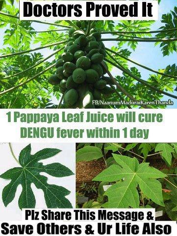 Home remedy ,Dengu fever ,Papaya leaf ,health tips,digestive system,