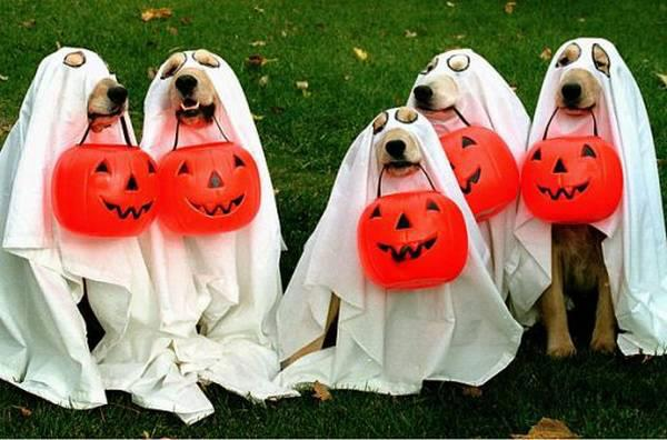 Happy Halloween Quotes,dog,bitches ,costumes,idea,images,sms,wishes,Positive Thinking ,Inspirational Quotes, Motivational Thoughts and Pictures
