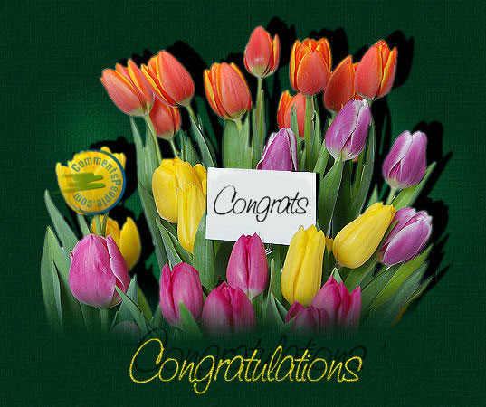 Congratulations graduation cards,message,Success ,Wishes,Achievement,