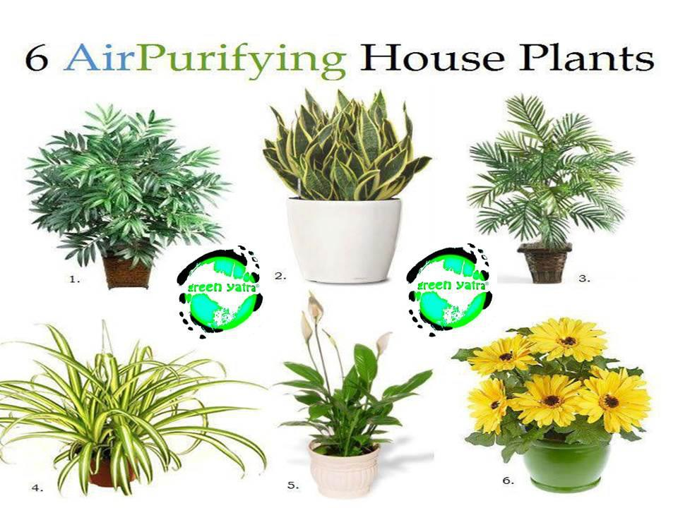indoor plants that purify the air naturally, Natural flower