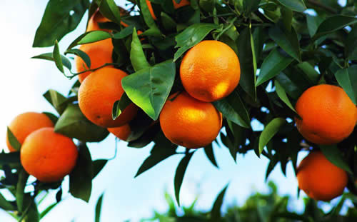 health tips,healthy living,food,benefits oranges,