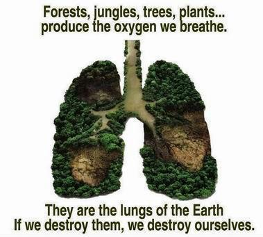 Health quote,images,health tips,save trees