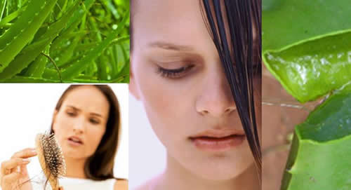 Uses of Fresh Aloe vera Gel for Hair,hair fall