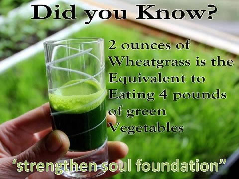 Health tips; Benefits of wheatgrass