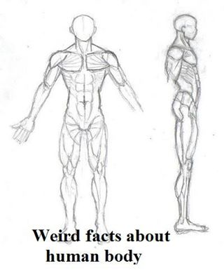 Weird facts about human body : | Daily Inspirations for Healthy Living