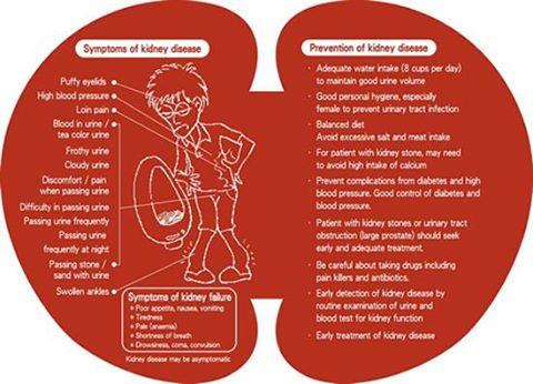 Symptoms prevention kidney disease Symptoms prevention-kidney disease