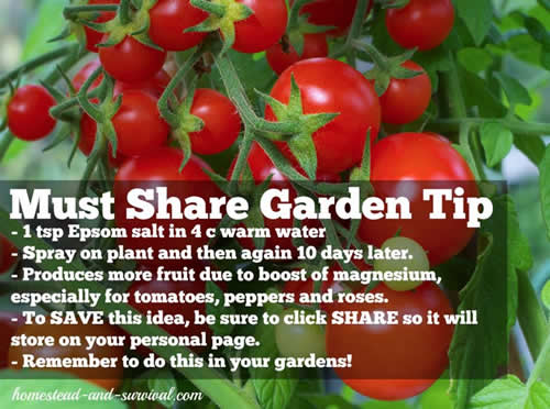 Useful Garden Tips